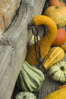 Free Pumpkins Stock Images - 3432744