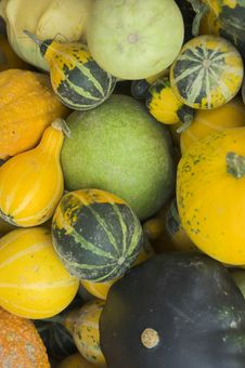 Free Pumpkins Closeup Stock Images - 3432754