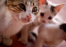 Free Cute Cats Stock Photos - 3433093