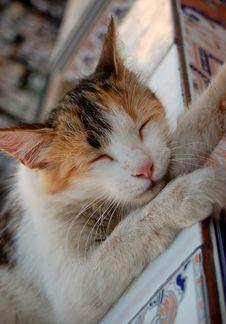 Free Sleeping Cat Stock Photos - 3433153