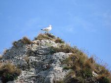 Free Free Bird Stock Photos - 3433203