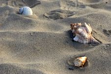 Free Three Shells In The Sand Stock Photo - 3433620