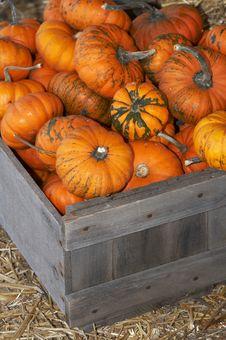 Free Small Pumpkins Royalty Free Stock Photo - 3433725