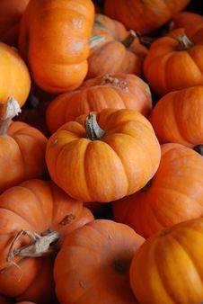Free Tiny Pumpkins Stock Photography - 3433832