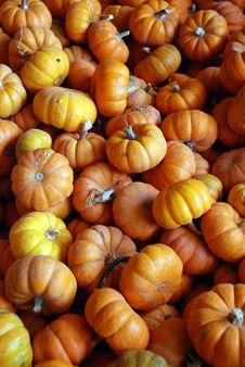 Free Many Mini Pumpkins Stock Image - 3433841