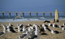 Sea Gulls And Surfers Royalty Free Stock Images