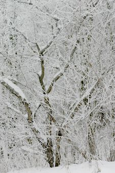Free Snowy Branches Stock Photos - 3434593