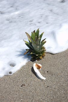 Free Pineapple On Beach With Shell Royalty Free Stock Images - 3435399