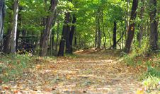 Free Leaf Covered Path In The Woods Royalty Free Stock Photography - 3438167