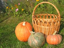 Free Yellow Basket And Pumpkins Stock Images - 3439584