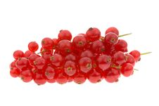 Free Fresh Red Currant Berries Royalty Free Stock Photo - 3439945