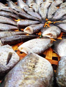 Free Drying Snakeskin Gourami Fishes Stock Image - 34310251