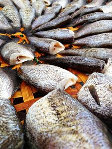 Free Drying Snakeskin Gourami Fishes Royalty Free Stock Photo - 34310255