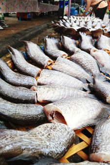 Free Drying Snakeskin Gourami Fishes Stock Image - 34310261