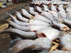 Free Snakeskin Gourami Fishes Stock Images - 34310264