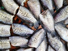 Free Drying Snakeskin Gourami Fishes Royalty Free Stock Photo - 34310285
