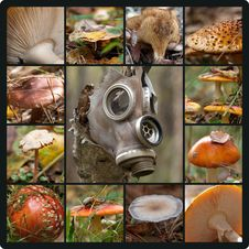 Free Toxic Forest Stock Photos - 34313833