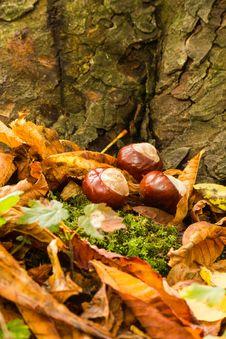 Free Autumn Stock Image - 34327821