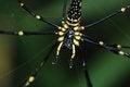 Free Spider Web Stock Photos - 34330703