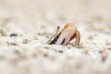 Free Hermit Crab Stock Photography - 34330662