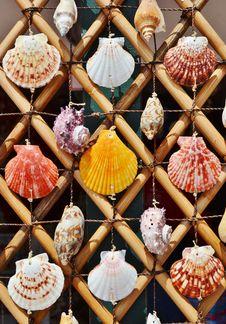 Free Sea Shells Royalty Free Stock Photos - 34339828