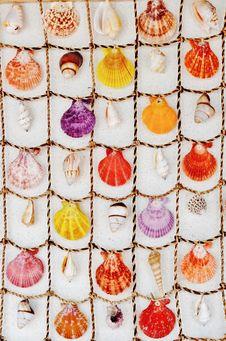 Free Sea Shells Stock Photos - 34339843