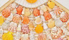 Free Sea Shells Stock Photography - 34339872