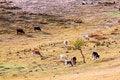 Free Dam Autumn In Inner Mongolia Stock Image - 34340191