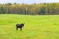 Free Donkey Royalty Free Stock Photos - 34346038