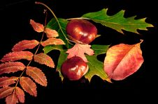 Free Autumn Still Life Stock Photography - 34350902