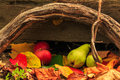 Free Autumn Still Life With Fruit In Leaves On Board And Vines Backgr Stock Photography - 34374842