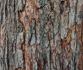 Free The Texture Of Tree Bark, Close-up. Royalty Free Stock Images - 34384299