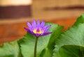 Free Lotus Stock Images - 34386754