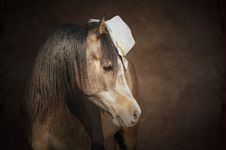 Horse And A Hat Royalty Free Stock Images
