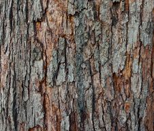 The Texture Of Tree Bark, Close-up. Royalty Free Stock Images