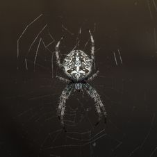 Free Arachnophobia Stock Images - 34389494