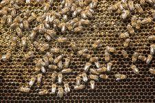 Free Honeycomb Royalty Free Stock Photography - 34392067