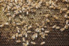 Free Honeycomb Royalty Free Stock Photography - 34397237