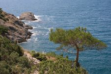Free Pine Above The Sea Stock Photography - 3440412