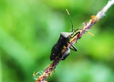 Free Insects Stock Photos - 3440613