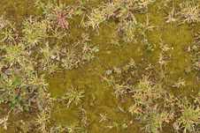 Free Moss Texture Stock Photo - 3440660