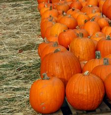 Free Rows Of Pumpkins For Sale Royalty Free Stock Photos - 3440678