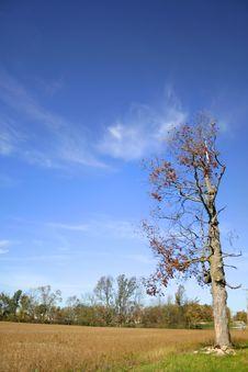 Free Single Tree Royalty Free Stock Photos - 3440728