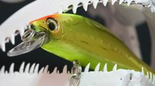 Free Fish Skull And Lure Royalty Free Stock Photography - 3442407