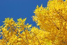 Free Fall Beautiful Leaves Stock Photography - 3443202