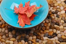 Leaves In Blue Bowl Royalty Free Stock Photography