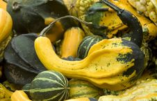 Free Gourds Stock Photos - 3443423