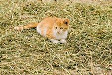 Free Farm Kitten Royalty Free Stock Photo - 3443895