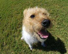 Free Terrier Stock Photo - 3444310