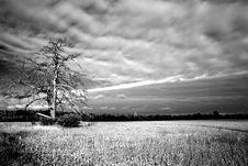 Free Dead Tree Royalty Free Stock Photography - 3444547